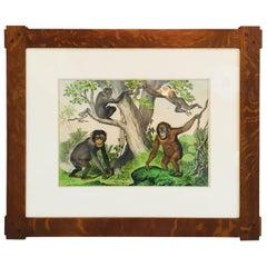 Framed Antique Exotic Animal Print