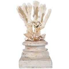 Shells Composition Sculpture on a Wooden capitel