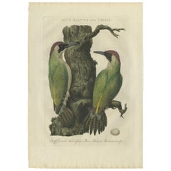 Antique Bird Print of the Green Woodpecker by Sepp & Nozeman, 1770