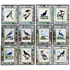 Set of Francois Nicolas Martinet Engravings of Birds, 1770-1786