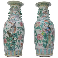 Set of Two Large Chinese Famille Rose Peacock Baluster Vases