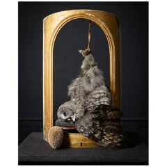 'Les Peintures des Taxidermistes' No.7. Art Print Photo by Sinke & Van Tongeren