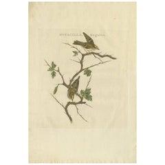 Antique Bird Print of the Goldcrest by Sepp & Nozeman, 1797