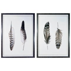 Contemporary Engravings of Feathers, Pair, Milan, Italy