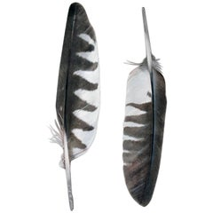 Contemporary Feather Engravings, Pair, Milan, Italy