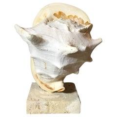 Sea Shell And Quartz Crystal Citrine