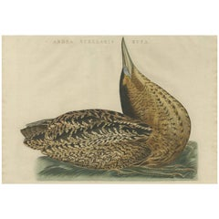 Antique Bird Print of the Great Bittern by Sepp & Nozeman, 1809