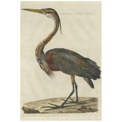 Antique Bird Print of the Purple Heron by Sepp & Nozeman, 1809