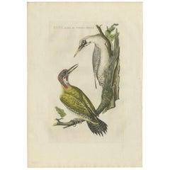 Antique Bird Print of the Green Woodpecker by Sepp & Nozeman, 1809