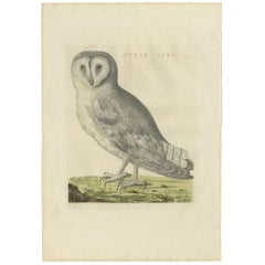 Antique Bird Print of a White Barn Owl by Sepp & Nozeman, 1809