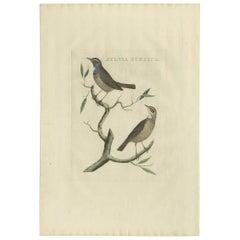Antique Bird Print of the Bluethroat by Sepp & Nozeman, 1829