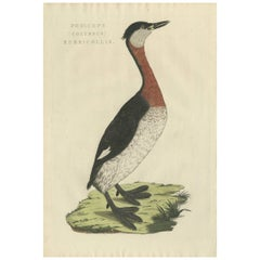 Antique Bird Print of the Red-Necked Grebe by Sepp & Nozeman, 1829