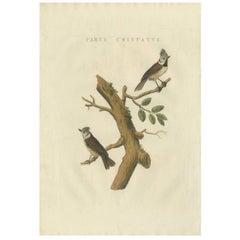 Antique Bird Print of the European Crested Tit by Sepp & Nozeman, 1829