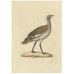 Antique Bird Print of the Great Bustard by Sepp & Nozeman, 1829