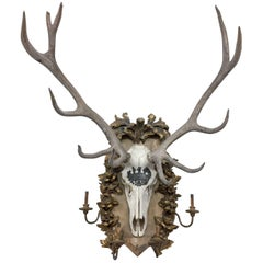 Habsburg Red Stag Trophy on Original Hand-Carved Gilt Candelabra Plaque
