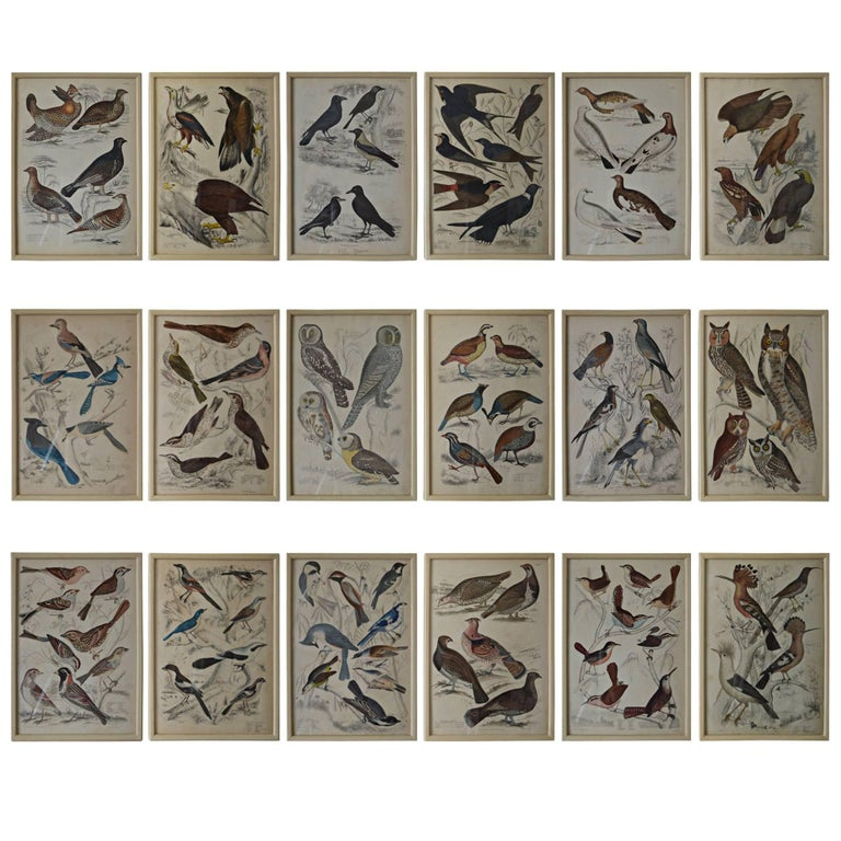 Set of 18 Antique Bird Prints in Faux Ivory Frames, 1830s