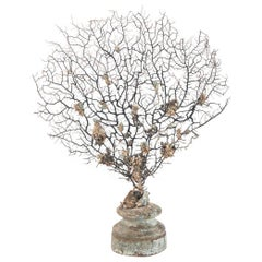 Black Coral Sea Fan Sculpture on 18th Century Italian Wood Fragment