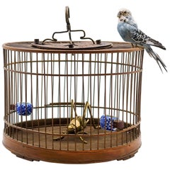 Cricket Cage with Brass Cricket and a Taxidermy Budgie