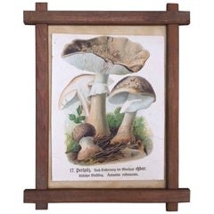 Vintage German Print of Mushrooms in a Folk Art Frame