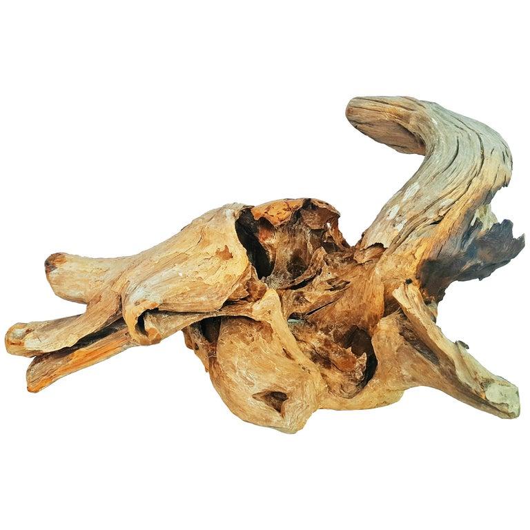 Very Large Old Natural Organic Sculptural Teak Driftwood