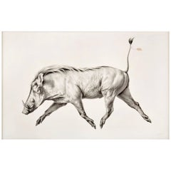 Mali Moir, Hypotype, Cape Warthog, Charcoal, the Red List