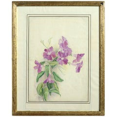 Late 19th Century Botanical Watercolour Depicting Clematis