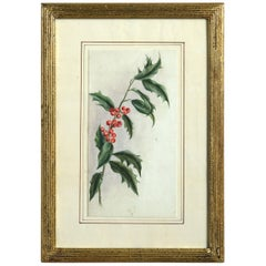 Late 19th Century Watercolor Study of Holly
