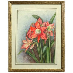Late 19th Century Botanical Watercolor of a Red Lily