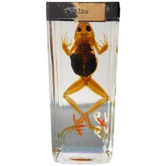 Vintage East European Skin Less Frog on Strong Water, Mid-20th Century