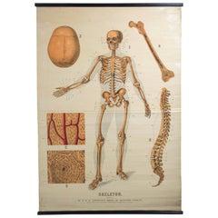 W&A J Johnstons Series of Anatomy, Skeleton
