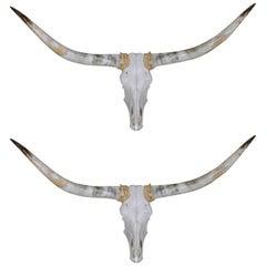 Pair of Wall Mounted Steer Horns