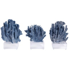 Three Blue Coral Sculptures on Lucite Priced Individually