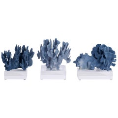Blue Coral Sculptures on Lucite, Priced Individually