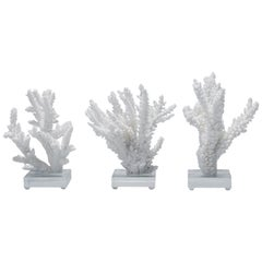 White Coral Sculptures on Lucite