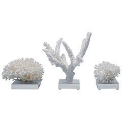 Three White Coral Specimens on Lucite, Priced Individually