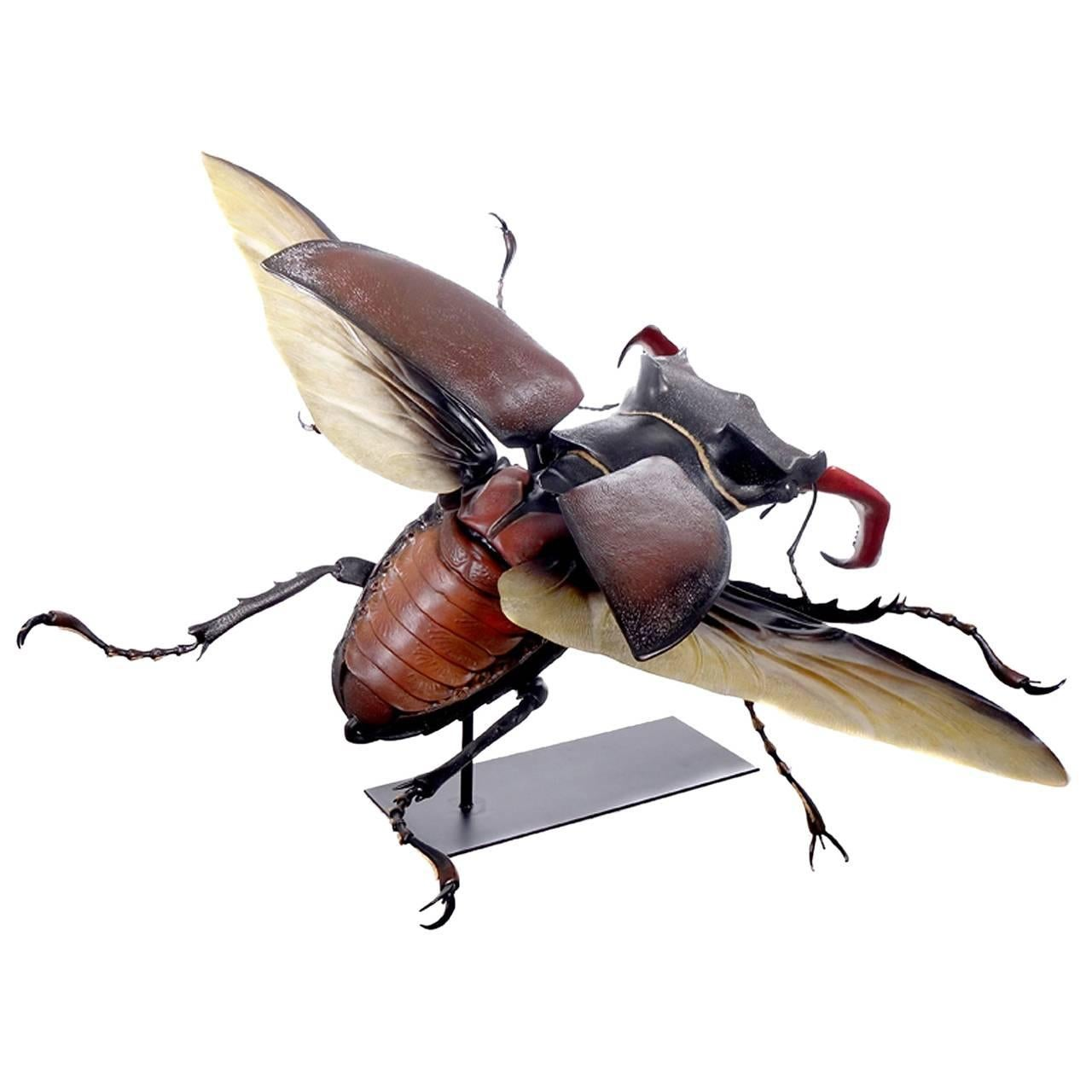 Museum Model of a Flying Beetle For Sale at 1stdibs