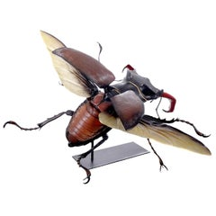 Museum Model of a Flying Beetle