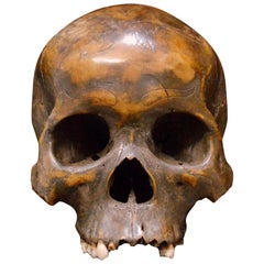 Striking Dayak Human Trophee Skull 'Ndaokus' from Borneo Indonesia