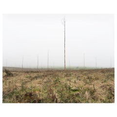 Christopher Sharples 'Forestry', 2017