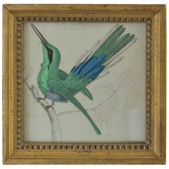 Original Antique Print of a Hummingbird, 1847