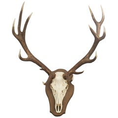 Red Deer Antler on Shield