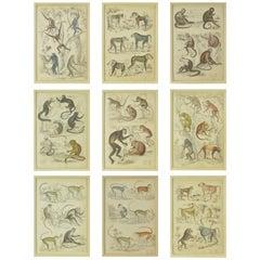 Set of Nine Antique Monkey Prints in Faux Ivory Frames, 1830s