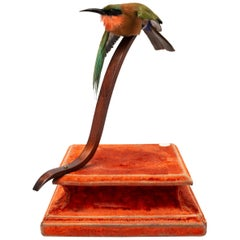 Red-Throated Bee-Eater Fine Taxidermy by DS&vT