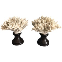 Coral Decorations on Stands