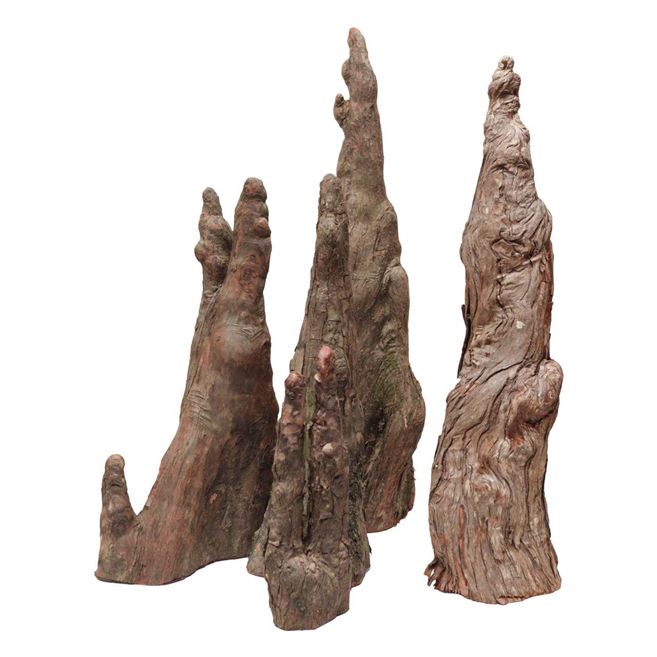 Interesting Set of 5 Sculptural Cypress Knees, Organic Art