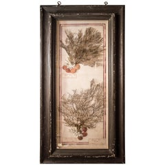 Midcentury Coral and Shells with Black Wood Frame Italian Composition