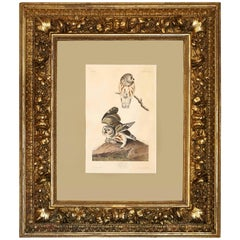 "Audubon Print of ""The Little Owl,"" 1834 Havell Edition in Baroque Frame"
