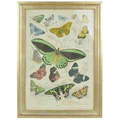 Original Antique Print of Butterflies, 1835