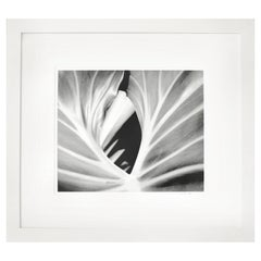 The Leaf, Framed Black and White Nature Photography, 2000