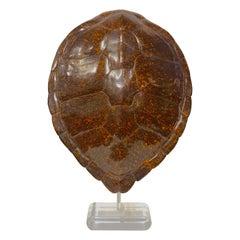 Faux Tortoise Shell Sculpture by Jean Roy Designs